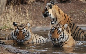 Bandhavgarh National Park 8 Best Places to Visit in the Andaman and Nicobar Islands