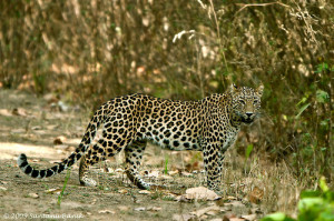 Kanha National Park Royal Bardia National Park