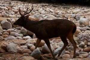 Papa Sambhar-Corbett-National-Park