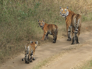Pench National Park Kaziranga National Park