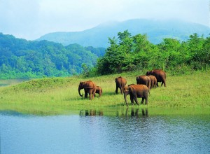 Periyar National Park Pench National Park - Pench Wildlife Sancturay