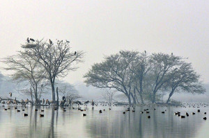 Sultanpur lake and birds