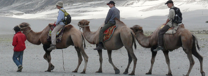 Camel Safari in Leh Ladakh