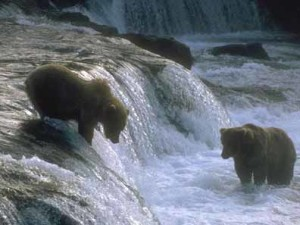 bears at Nanda Devi National Park