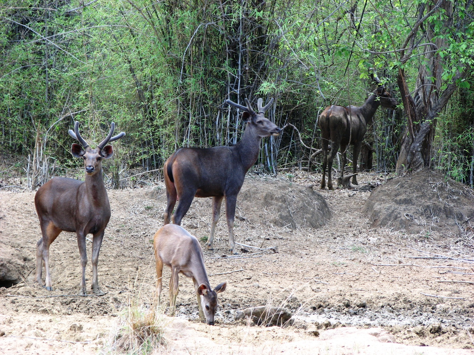 animals in Tadoba-Wildlife-Sanctuary