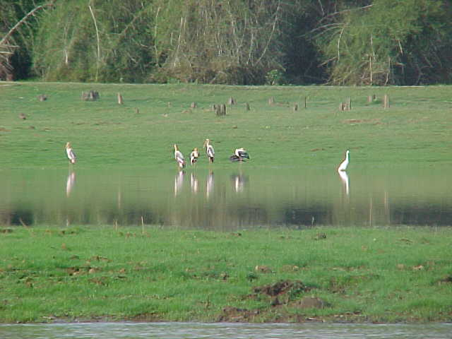 birds in wayanad sanctury