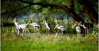 birds - keoladeo national park