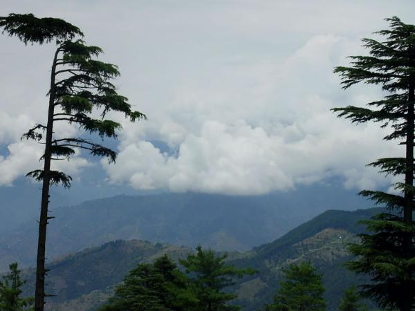 Patnitop India  City pictures : Patnitop hill station | India Travel Guide