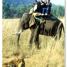 rajaji national park jungle safari