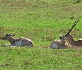 Kedarnath Wildlife Sanctuary chopta travel guide