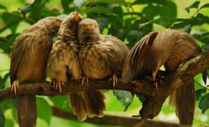 Perambikulam birds