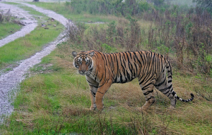 Rajiv Gandhi Wildlife Sanctuary