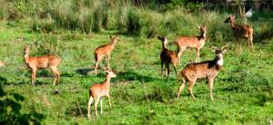 shenduruny wildlife sanctuary