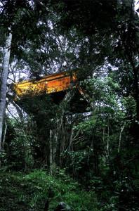 tree house Vythiri