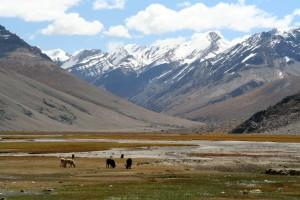Rangdum valley - Ladakh
