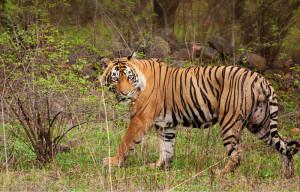 Srisailam Wildlife Reserve