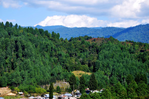 Ziro hill station