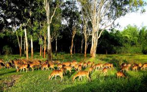 Bandipur Wildlife Sanctuary