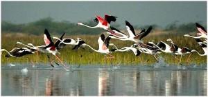 bird watching bharatpur