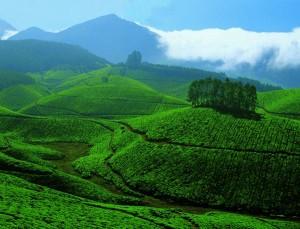 devikulam Kerala