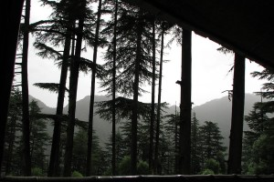 Dhanaulti forest
