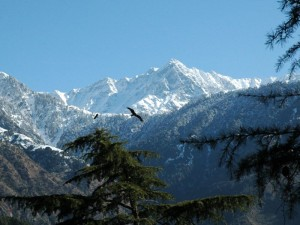 Dharamshala snow mountains
