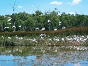 Vedanthangal birds