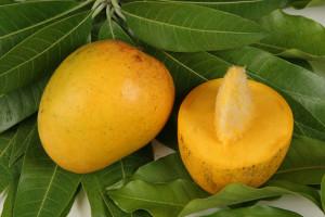 devgarh Alphonso mangoes