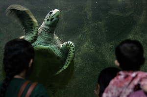 turtle at Taraporewala Aquarium