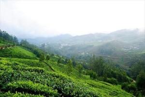 Sandalwood Forests Kerala