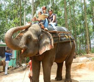 Elephant rides Munnar