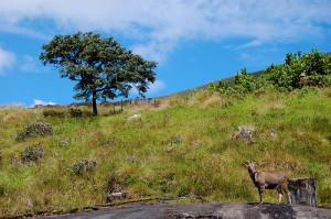 Eravikulam National Park Munnar places to visit