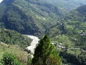 chopta valley chopta travel guide