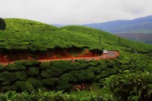 munnar Munnar - Call from the Depth of Nature