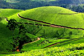 images 5 Tourism in Kerala