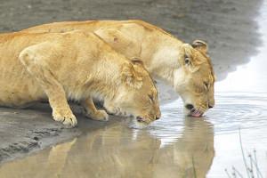 Gir National Park & Wildlife Sanctuary