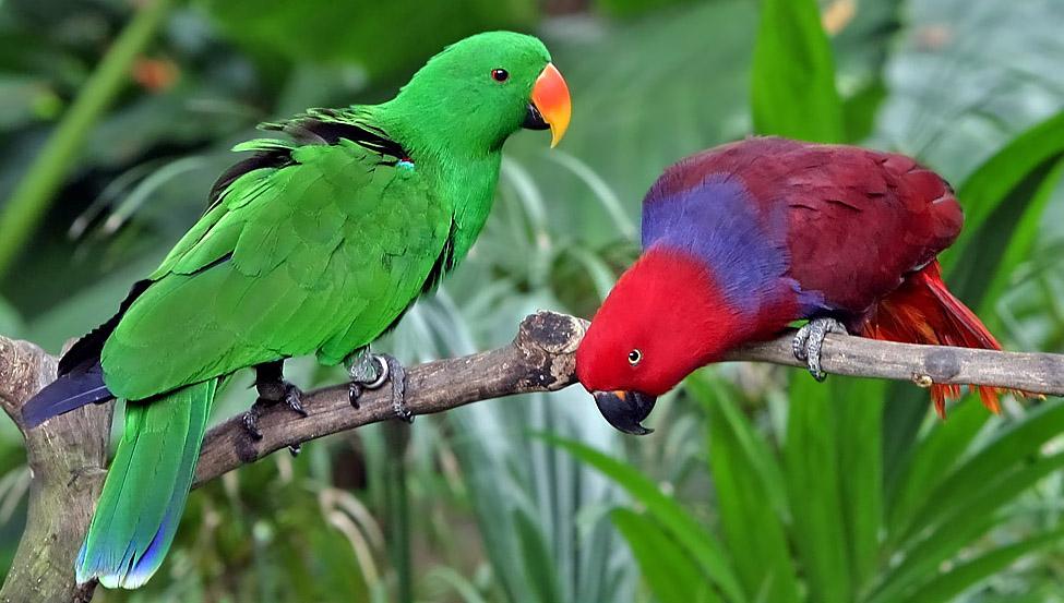 Parrots at Kumarakom Bird Sanctuary