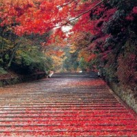 Nainital Arguably the best honeymoon places in India in January