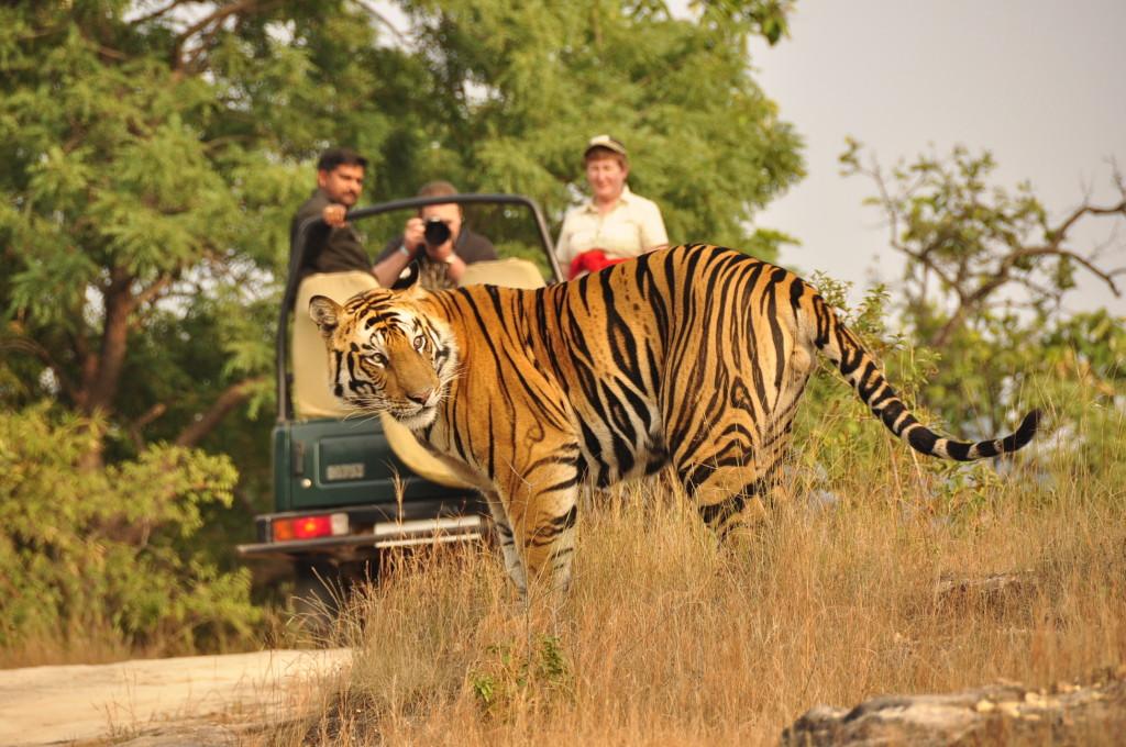 ranthambore-safari