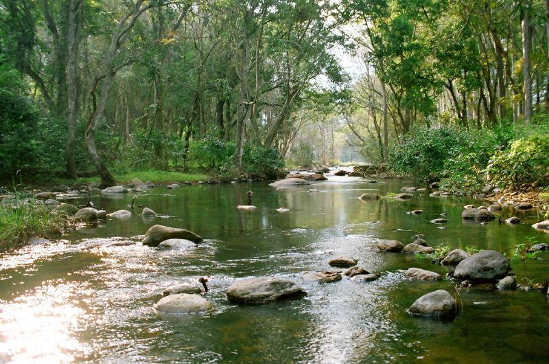 Chinnar_Wildlife_Sanctuary-3