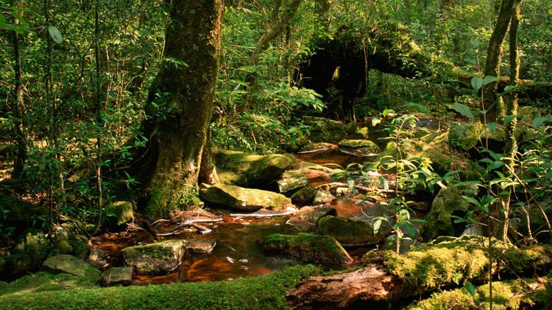 Peppara-Wildlife-Sanctuary