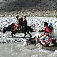 Yaks in Pakistan 3 Adventure activities in India that will pump you up