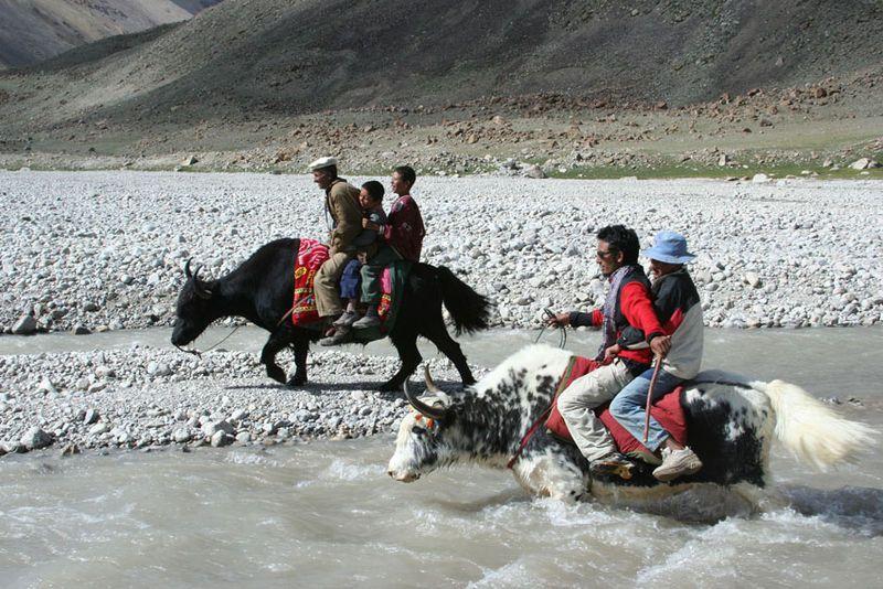Yaks-in-Pakistan-3