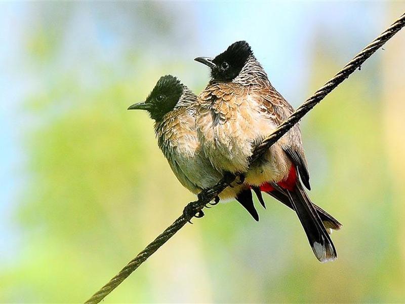 mangalavanam-bird-sanctuary-3