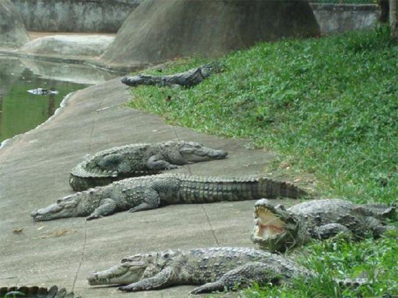 neyyar-wildlife-sanctuary-2