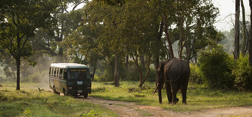 Elephant-in-Bandipur-F