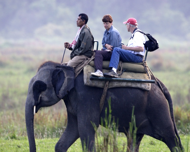 Elephant_safari_in_Kaziranga
