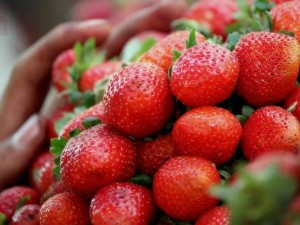 Strawberries for sale at Mahabaleshwar A few species that you would have never thought of finding in India