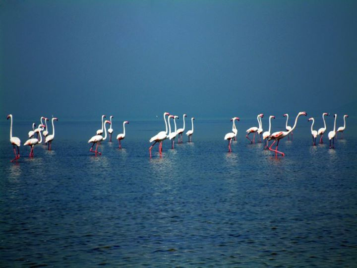 Chilka Lake Bird Sanctuary
