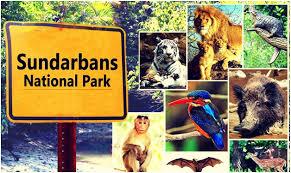SNP Sundarban Safari and Royal Bengal Tiger